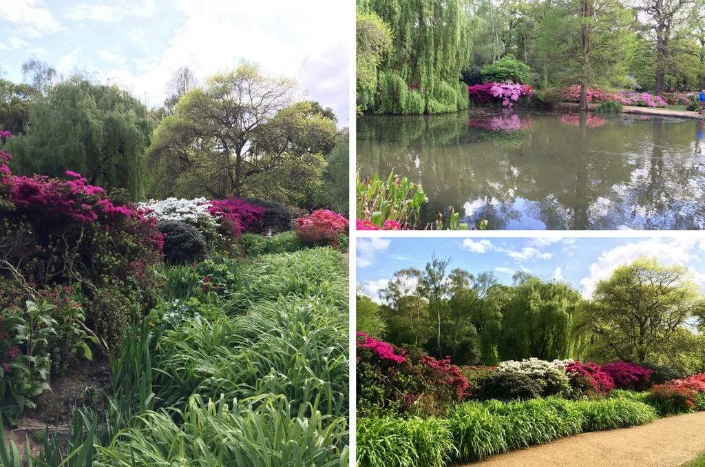 Англия весной - Isabella plantation