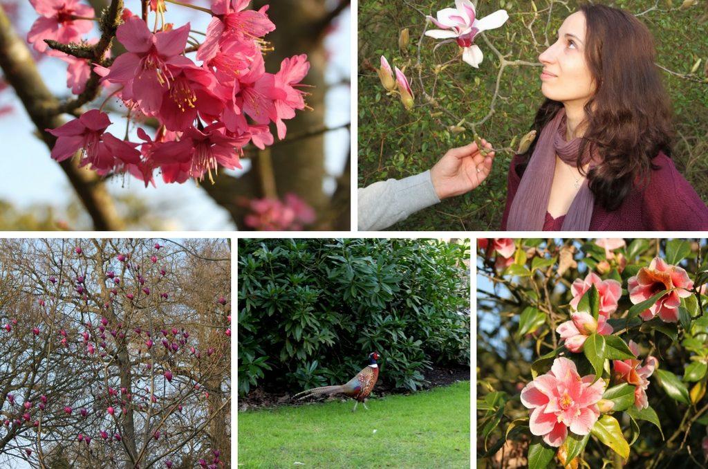 Англия весной - Savill Garden