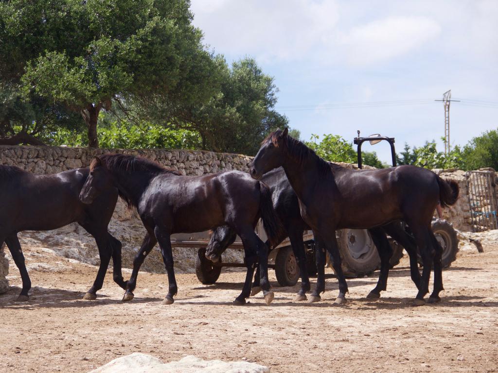 Менорка. Балеарские острова с ребенком - Менорканские лошади